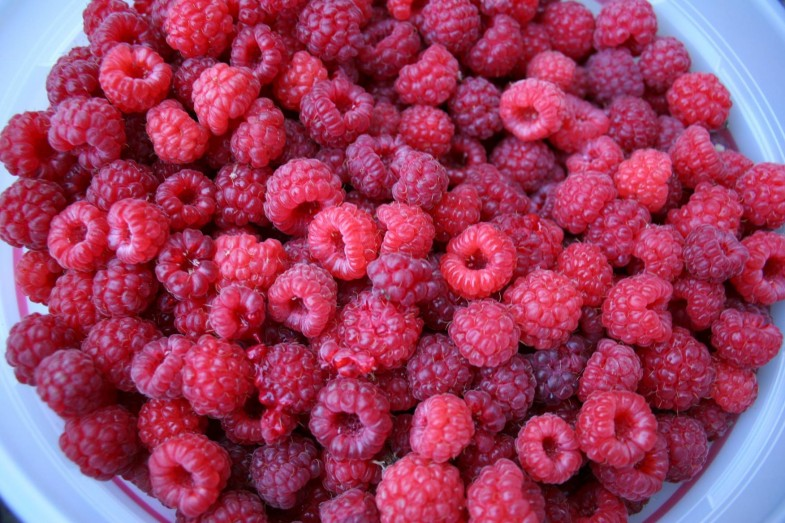 442517-fruit-raspberry-wallpaper-9