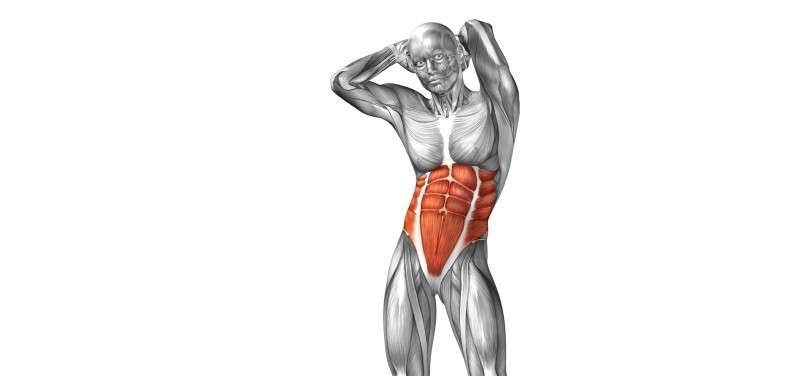 Abdominal-muscles