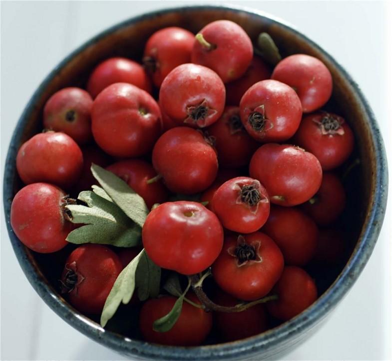 hawthorn-berries1