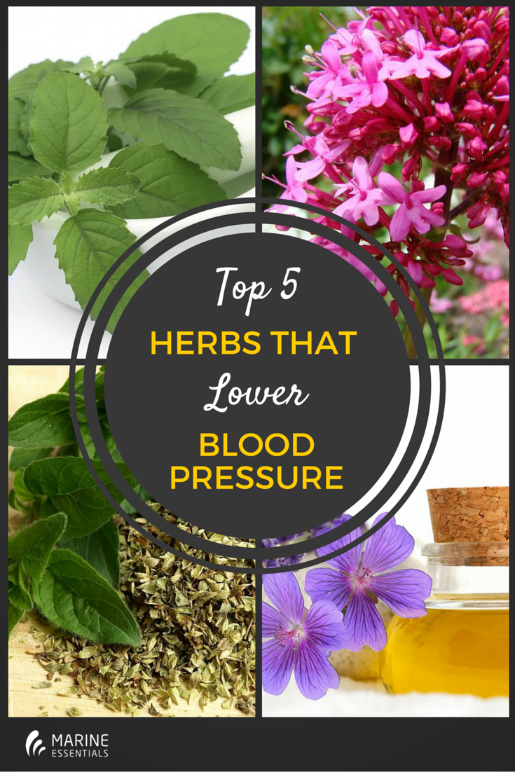 Top 5 Herbs That Lower Blood Pressure