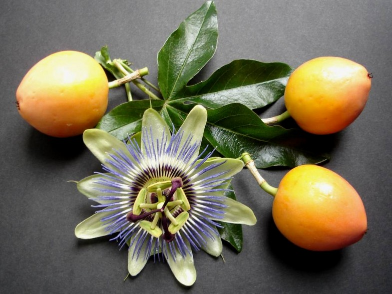 passion_flower_and_fruit_by_thelma1