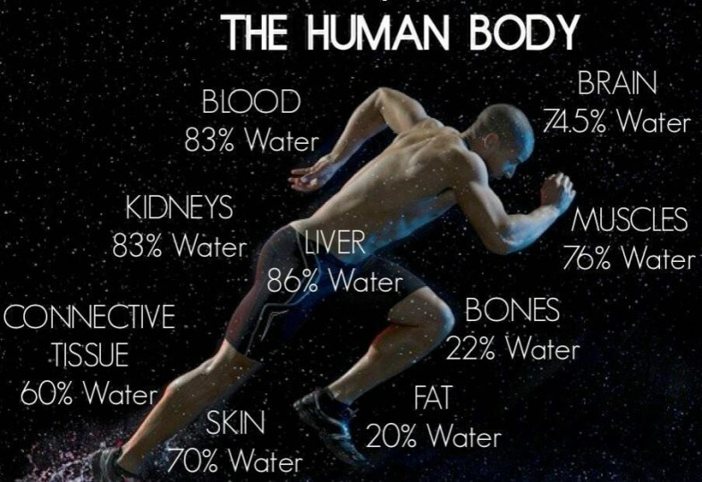 the-human-body-water