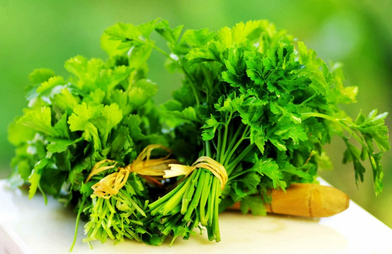 Parsley-for-Parsley-Tea-