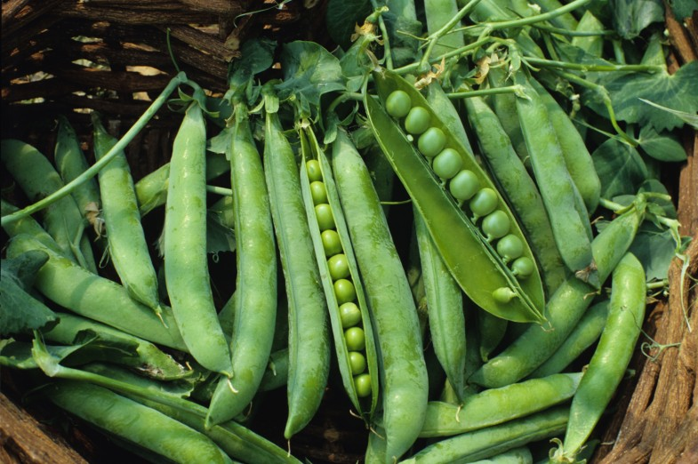 green_arrow_pea_seeds
