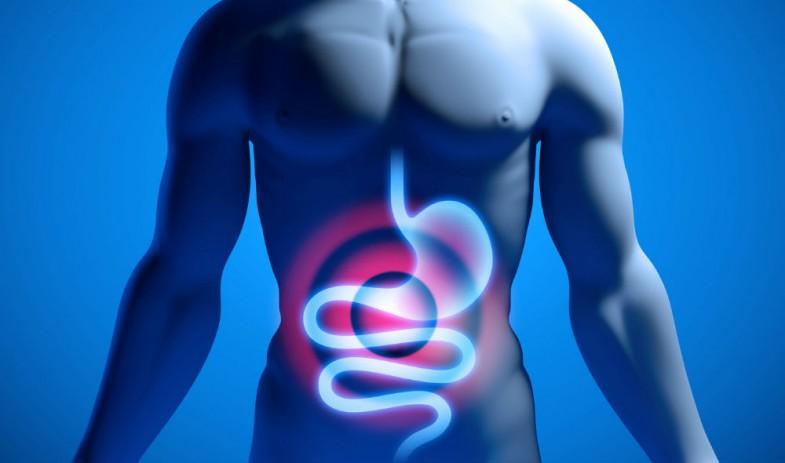 gut-health_0